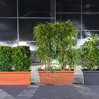 Tröge mit Lorbeer, Bambus und Kirschlorbeer für Gastgärten
